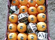 ارسال جمعی انواع الفواکهة و الخضروات ایران