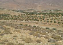 أرض زراعية ريف دمشق طريق قطنا عرنة قلعة جندل.