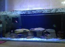حوض سمك سيكلد حجم كبير كامل للبيع