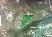 ارض للبيع في بلال / بدر الجديدة