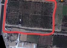 مزرعه مميزه للبيع بالنوبارية
