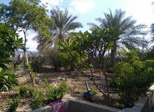 مزرعة للبيع  -حي السعد- نزوى