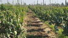 ارض لبناء مستقبل اولادك 50 فدان تصلح للزراعه علي طريق مصر الفيوم خالصه الاوراق