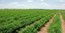 فرصه امتلك ارض استصلاح صحراوي بالمغره 25 فدان بالعلمين