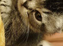 البيعع قطط