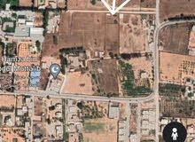 1000م قابل للقسمة واجهة 37م اربع شوارع الكوشة - عليوي خلف جامع نشنوش