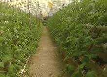 زراعة المائية بدون تربة هيدروبونيك أفضل استثمار