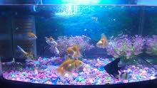 حوض سمك fish aquariam