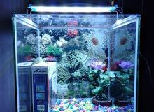 new aquarium for sale.