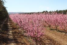 مزرعة استثمارية للبيع في جنوب الاردن من المالك مباشرة