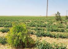 لراغبي الاستثمار الزراعي والانتاج الحيواني
