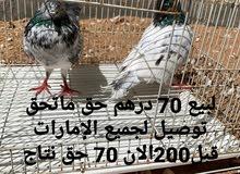 70درهم فقط في توصيل لجميع الإمارات