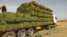 ابحث عن مستثمرين يوجد لدي برسيم  سوداني للبيع جاهز للتصدير الي عمان