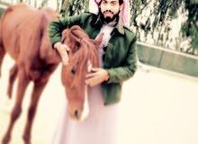 حصان للبيع شعبي