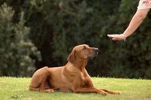 Dog Trainer مدرب الكلاب