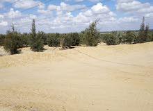 أرض زراعية للبيع مساحة 32 فدان