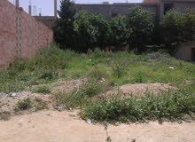ارض في مزارة عبد القادر تاورة سوق اهراس قرب مسجد حمزة بن عبد المطلب