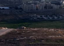 قطعة ارض للبيع في شفا بدران ملاصق حوض مرج الفرس