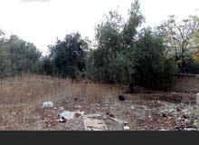 بيت ريفي مستقل في الأردن اربد قرية مخربا