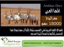المها العربي