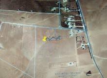 جنوب عمان الزعفران 4 دونم مطلوب 19 ألف