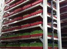 اطباق الشعير المستنبت و عمل غرف استنبات الشعير علف للحلال و الابقار