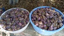 ثوم عماني إنتاج الجبل الاخضر