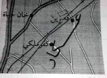 بستان حمضيات وافوكا في قعبرين