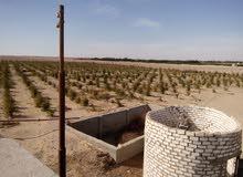 30 فدان للبيع او المشاركه   تمليك  مقنن من المحافظه طريق اسيوط الغربي المنيا