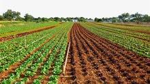 قطعة ارض زراعية للبيع 50 فدان قابله للتجزئه  5 فدان