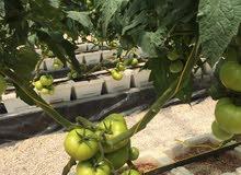 مهندس زراعي - صالات زراعية