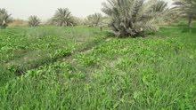 أرض زراعية مساحتها 8 دونم وبيها بيت صب مسلح