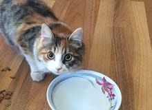 قطة MIX للتبني مجانا