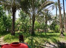 بستان للبيع في كربلاء