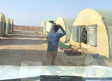 بيوت محمية للايجار فرصه للاستثمار لمن يملك راس مال