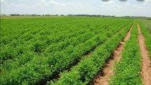 أرض زراعية للبيع بمنية النصر