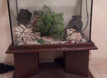 حوض سمك حجم وسط