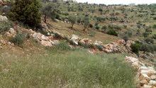 أرض زراعية جبلية في عجلون  الاردن 5 دونم تصلح مصيف أو شاليهات للبيع