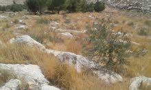 اراضي ذيبان جبل بني حميده القريات قرب مكاور
