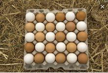 مطلوب بيض ملقح للفقاسة