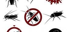 للقضاء على مشكلة الحشرات والقوارض بالمنازل