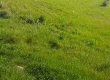 مادبا-ماعين-قيطون عيون الذيب-ارض زراعيه 5382م للبيع