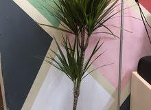 original plant in good condition