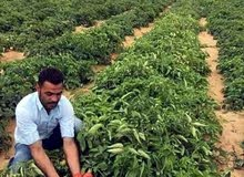 ارض زراعي للبيع