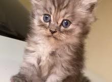 قطط للحجز