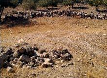 ارض مطله على فلسطين
