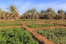 مزرعه للبيع في منطقة السكت