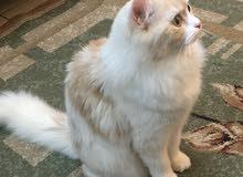 استضافة قطة لمدة شهرين