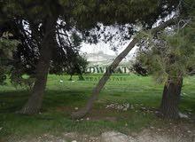 ارض للبيع في منطقة بدر الجديدة (الكاشف) , مساحة الارض 1100م