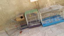 اقفاص عصافير تبيلهن برمه